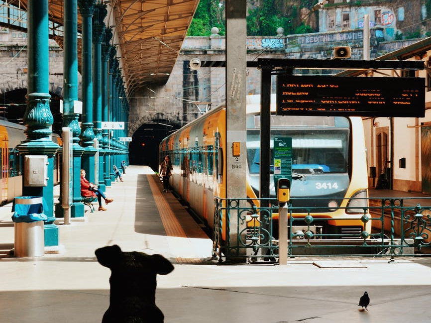 black dog sitting on concrete surface